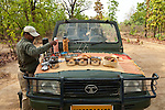 Naturalist Raj Kishore from Mahua Kothi lodge pours a welcome morning tea mid- safari at Bandhavgarh National Park in Madhya Pradesh, India. People come from all over the world to view the tigers. Bandhavgarh has one of the most densely populated tiger colony's anywhere in India or the world . Chital or spotted deer, and many other species of wildlife are also abundant in the Park which closes from June 30 to October 1 for the annual Monsoon.