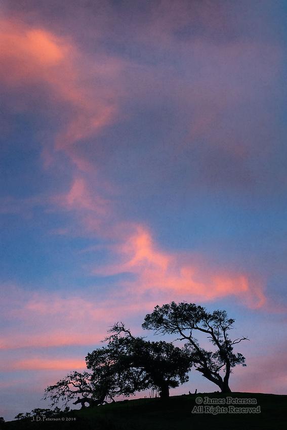 Oak Trees, Diablo Mountains, California