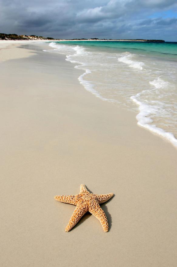 Starfish on remote beach