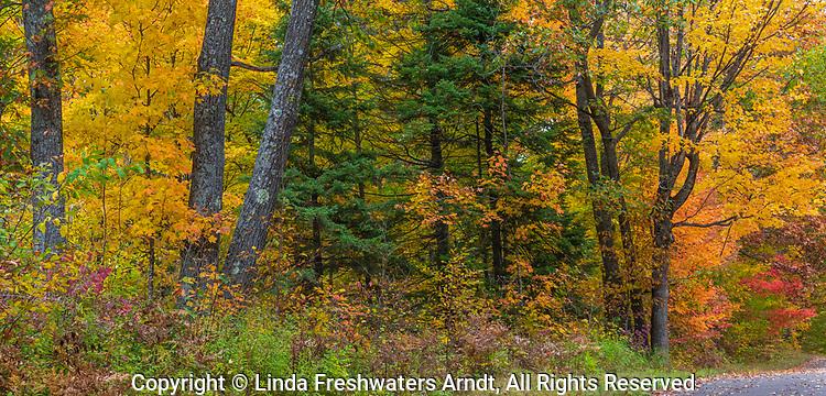 Autumn forest in northern Wisconsin.