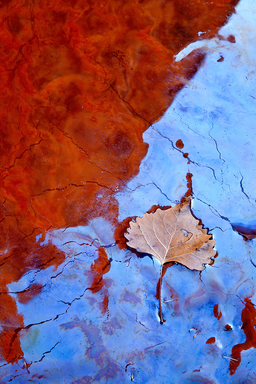 A cottonwood leaf rests atop iridescent biofilm surface of a small creek in the Grand Staircase-Escalante National Monument, Utah, USA