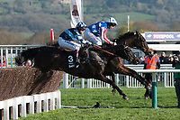 Special Tiara leads the field in the Betway Queen Mother Champion Hurdle Steeple Chase during Ladies Day of The Festival at Cheltenham Racecourse on Wednesday 15th March 2017 (Photo by Rob Munro/Stewart Communications)