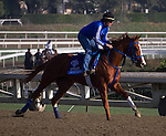 Brown Almighty galloping this morning in preparation of Breeder's Cup at Santa Anita Park in Arcadia, California on October 31, 2012.