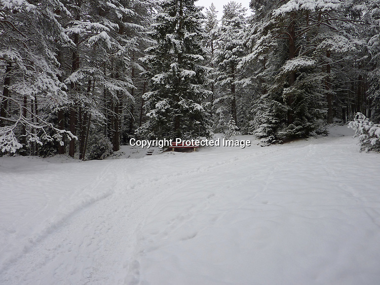 Seefeld, Austria - December 12, 2009:  A bench offers a place to rest in a snowy clearing.