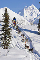 Bjornar Andersen of Norway comes down embankment to Puntilla Lake outside Rainy Pass Chkpt 2006 Iditarod AK