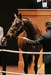 Hip #88 Crisp consigned by Lane's End sold for $1,200,000 to ADENA SPRINGS at the Fasig Tipton November Sale on November 6, 2011.