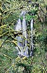 Waterfall, Eagle Creek, Columbia River Gorge National Scenic Area, Oregon, USA