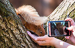 Squirrel whisperer showcases gallery of close-up snaps of red squirrels by Zoe Cox
