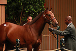13 September 2011.Hip #374 Candy Ride - Sweet and Clever colt sold for $220,000.