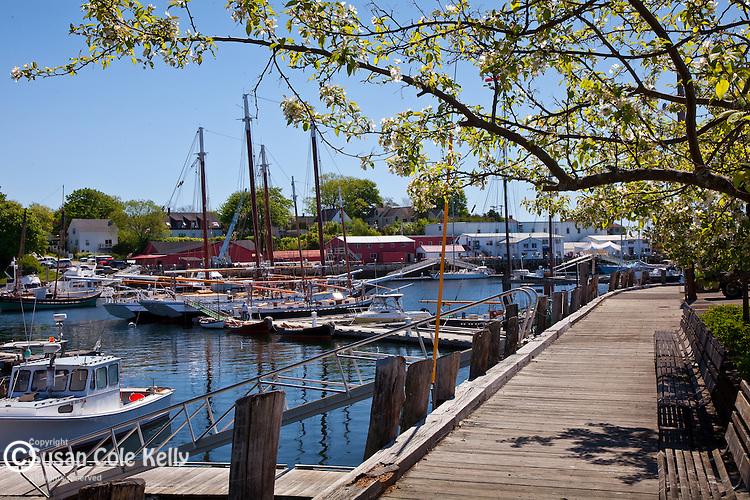 Springtime in Camden Harbor in Camden, ME, USA