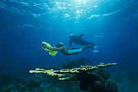 JoJo, a wild sociable bottlenose dolphin, Tursiops truncatus, or ambassador dolphin, swims with a human friend over a reef with elkhorn coral, Acropora palmata, Providenciales, Turks and Caicos, Caribbean Sea, Atlantic