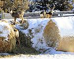 Montana and Wyoming Deer Photos