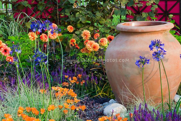 Dahlias, Hydrangea, Carex ornamental grass, Arctotis flowers, Salvia, Agapanthus for an orange and blue purple themed garden, gareden container pot urn ornament, climbing vines on trellis