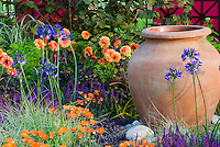 Dahlias, Hydrangea, Carex ornamental grass, Arctotis flowers, Salvia, Agapanthus for an orange and blue purple themed garden, gareden container pot urn ornament, climbing vines on trellis