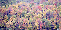 Autumn and Beautiful Fall Color in the mountains of Scenic Western Maryland