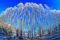 200718-Arrow Junction, Crown Range, Arrowtown Winter Wonderland. Copyright Photo: Libby Law Photography