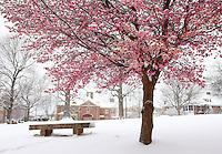 Snow covered lee park in Charlottesville, Va.