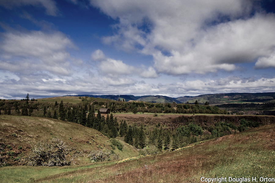 Columbia River Gorge wildflowers and wild oaks front a landscape of farms and barns from the Old Gorge Highway in Oregon, near the Nature Conservancy Tom McCall Preserve and Rowena Overlook.  This view over farmland and barn looks past a hidden Columbia River toward cliffs on the Washington State side of the river.  Near the towns of Hood River, The Dalles, and Rowena, Oregon.