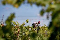 Davide Formolo (ITA/UAE-Emirates)<br /> <br /> Stage 20 (ITT) from Libourne to Saint-Émilion (30.8km)<br /> 108th Tour de France 2021 (2.UWT)<br /> <br /> ©kramon