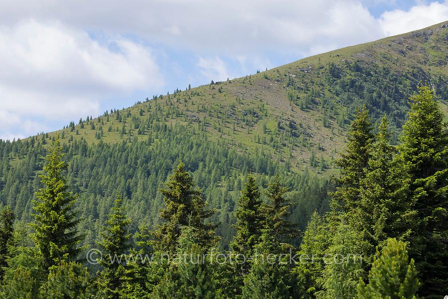 Bergwald, Nadelwald, Waldgrenze, Baumgrenze, timberline, timber line, tree limit, tree line, timber limit, Österreich, Kärnten, Alpen, alp, alps, Austria, Gebirge