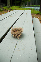 Empty bird's nest on picnic table