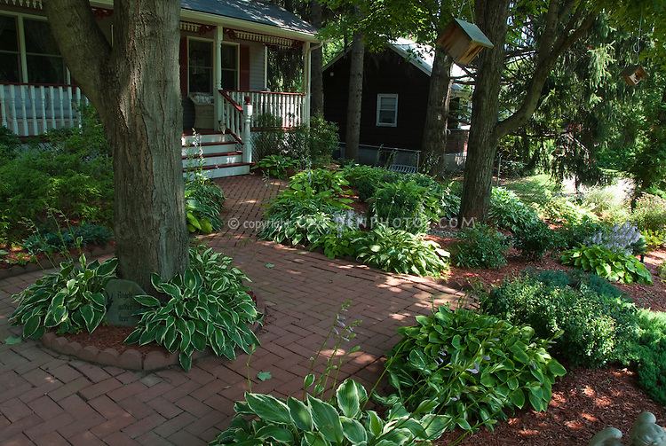 Home shade garden with brick walkway, hostas, large trees, house
