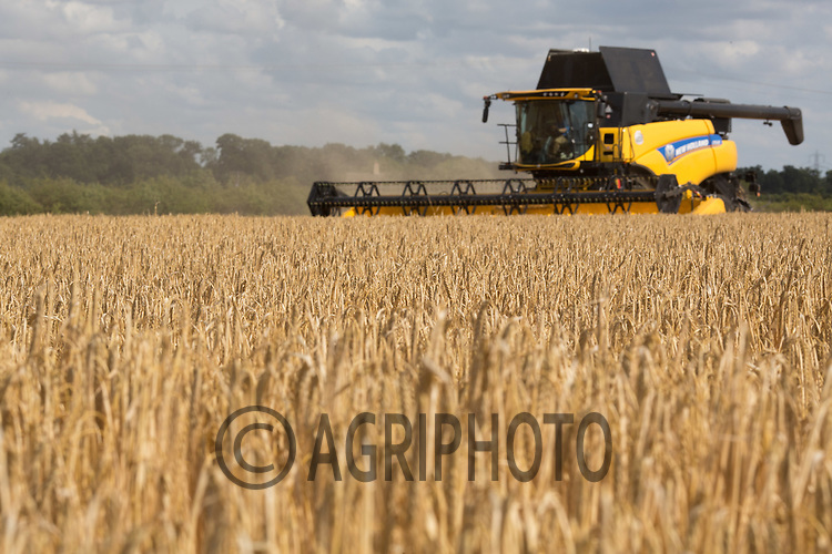 Harvesting Winter Barley in Lincolnshire<br /> Picture Tim Scrivener 07850 303986<br /> ….Covering agriculture in the UK….