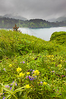 Wildflowers bloom in a meadow along the shore of Kodiak Island, Alaska.