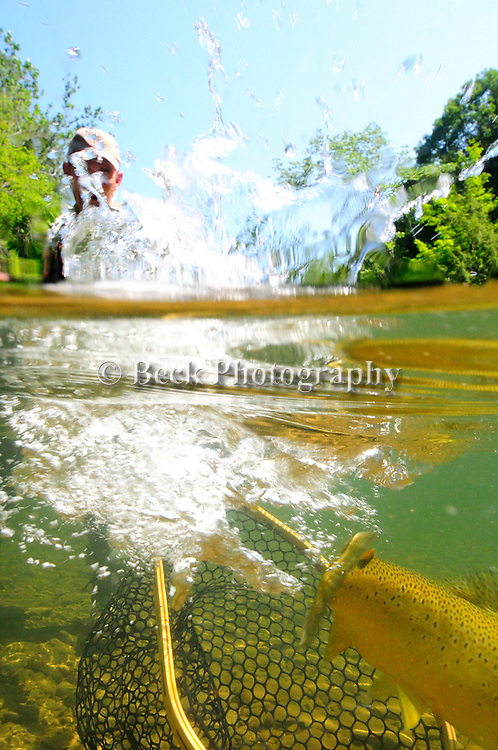 CATCHING A BROWN TROUT UNDERWATER
