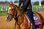 November 3, 2020: Editor At Large, trained by trainer Chad C. Brown, exercises in preparation for the Breeders' Cup Juvenile Fillies Turf at Keeneland Racetrack in Lexington, Kentucky on November 3, 2020. Jon Durr/Eclipse Sportswire/Breeders Cup