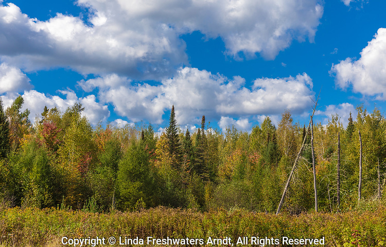 A pretty fall day in the Chequamegon National Forest in northern Wisconsin.