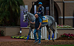 DEL MAR, CA - OCTOBER 30: Win the Space, owned by Kretz Racing LLC and trained by George Papaprodromou, walks the paddock after morning workouts at Del Mar Thoroughbred Club on October 30, 2017 in Del Mar, California. (Photo by Anna Purdy/Eclipse Sportswire/Breeders Cup)