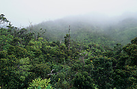 View of Alakai Swamp, Kauai, Hawaii, USA, August 1996