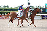Beloveda on post parade for The Princess Rooney Handicap (G1), Calder Race Course, Miami Gardens Florida. 07-07-2012.  Arron Haggart/Eclipse Sportswire.