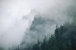 Coastal mountainous forest shrouded in fog.