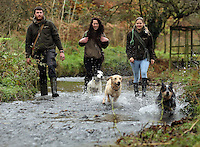FAO JANET TOMLINSON, DAILY MAIL PICTURE DESK<br />Pictured L-R: James Smith, Sian Richards and Charlotte Lewis with dogs in one of the farm's streams Wednesday 23 November 2016<br />Re: The Dog House in the village of Talog, Carmarthenshire, Wales, UK