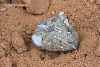 OW09-516z  Regurgitated owl pellet, showing bones and hair
