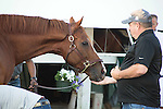 HALLANDALE BEACH, FL - JANUARY 21: California Chrome at the barn after working 5 furlongs at Gulfstream Park. (Photo by Arron Haggart/Eclipse Sportswire/Getty Images