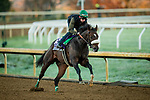 October 31, 2020: Bodenheimer, trained by trainer Valorie L. Lund, exercises in preparation for the Breeders' Cup Juvenile Turf Sprint at Keeneland Racetrack in Lexington, Kentucky on October 31, 2020. Alex Evers/Eclipse Sportswire/Breeders Cup