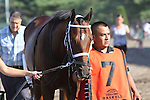 August 2, 2015. Top Clearance, trained by Wayne Catalano, walks to the paddock before the  Grade I William Hill Haskell Invitational Stakes, one and 1/8 miles on the dirt  for three year olds at Monmouth Park in Oceanport, NJ.  Joan Fairman Kanes/ESW/CSM