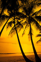 Colorful yellow sunset and palm trees at ocean in San Juan Puerto Rico USA