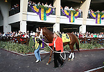 7 February 2009:  Cindy Jones walks It Happened Again before the Risen Star Stakes at the Fair Grounds Race Course in New Orleans, Louisiana.