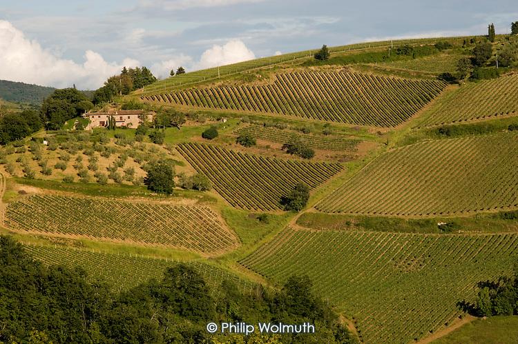Vineyards in the Chianti region of Tuscany, Italy.