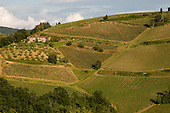 Vineyards in the Chianti region of Tuscany, Italy.