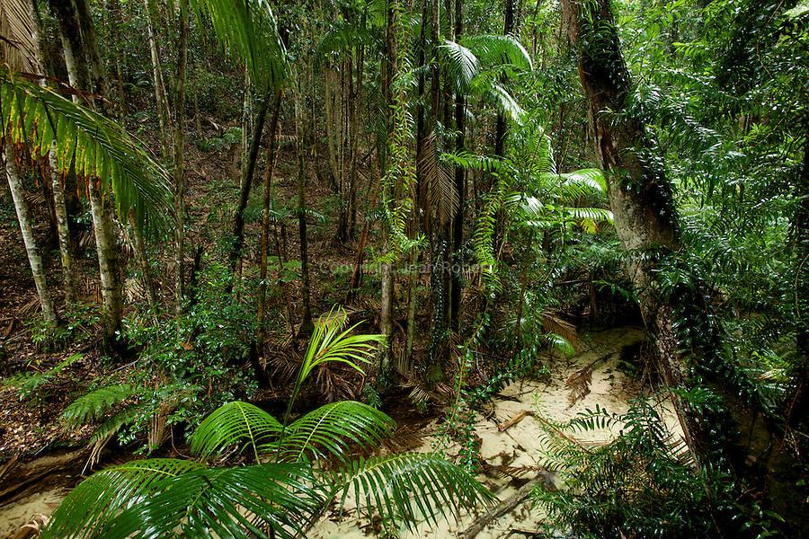 rainforest of Central station along Wanggoolba Creek
