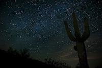 Milky Way over saguaros, Arizona.