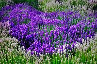 Garden flowers at Jardin du Soleil. Washington