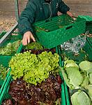 Salad, Salat on Bauernmarkt, Farmer's market in Liechtenstein