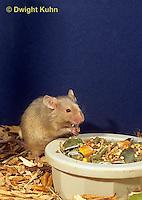 MU60-072z  Pet mouse - eating