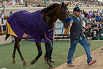 """DEL MAR, CA  AUGUST 17:  #6 Higher Power, ridden by Flavien Prat, receives his Breeders' Cup cooler after winning the TVG Pacific Classic (Grade 1) """"Win and You're In Breeders' Cup Classic Division"""" on August 17, 2019 at Del Mar Thoroughbred Club in Del Mar, CA. (Photo by Casey Phillips/Eclipse Sportswire/CSM)"""